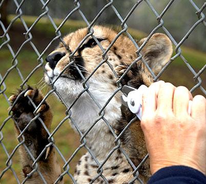 San Diego Zoo Global Academy