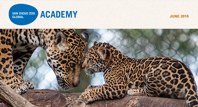 San Diego Zoo Global Academy