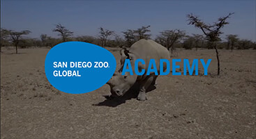Opening frame of the case study example shows a northern white rhino at a reserve in Africa.