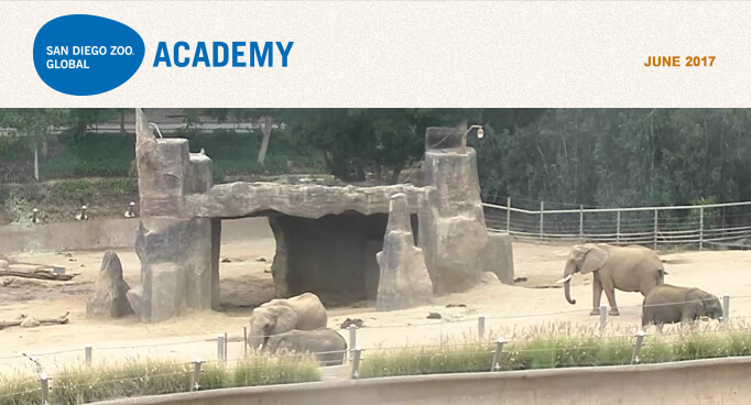 San Diego Zoo Global Academy, April 2017. Photo is five hamadryas baboons, with a larger dominant male in front.
