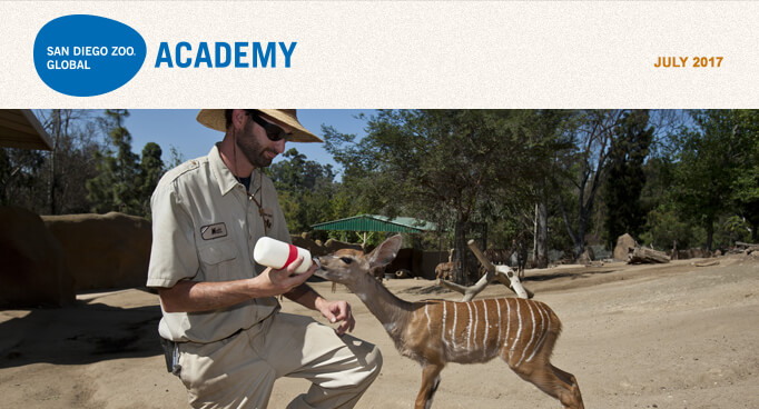 San Diego Zoo Global Academy, July 2017. Photo is a keeper bottle feeding a baby eland.