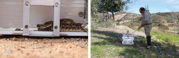 snake release