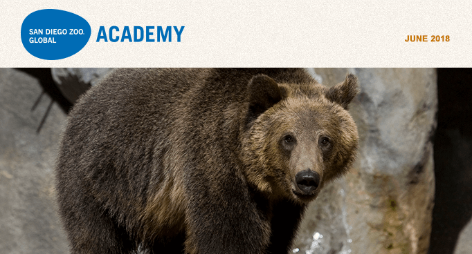 San Diego Zoo Global Academy, June 2018. Photo grizzly bear.