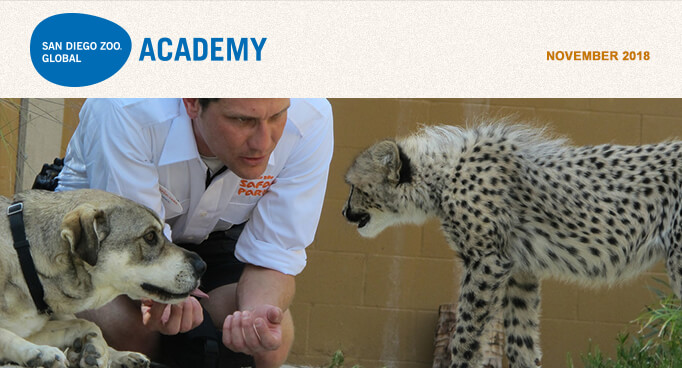 San Diego Zoo Global Academy, November 2018. Photo Keeper with dog and cheetah.