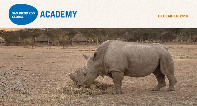 San Diego Zoo Global Academy, November 2018. Photo Sudan, the last male Northern white rhino