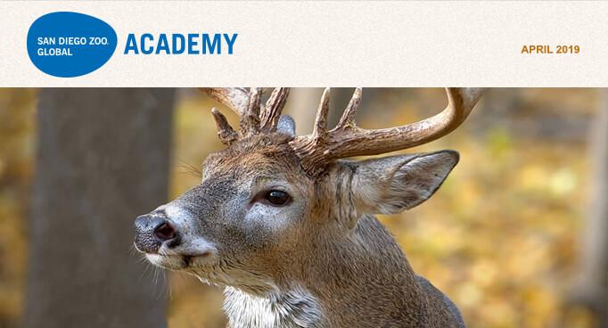 San Diego Zoo Global Academy, April 2019