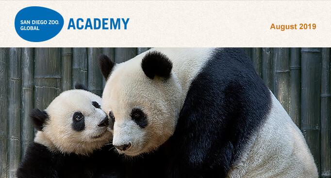 San Diego Zoo Global Academy, August 2019. Photo of Giant Panda Bai Yun and cub