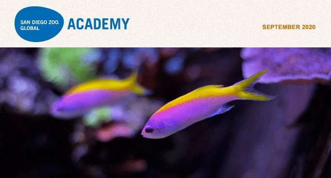 San Diego Zoo Global Academy, September 2020. colorful fishes