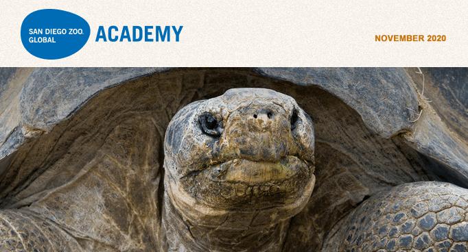 San Diego Zoo Global Academy, November 2020. baby tapir