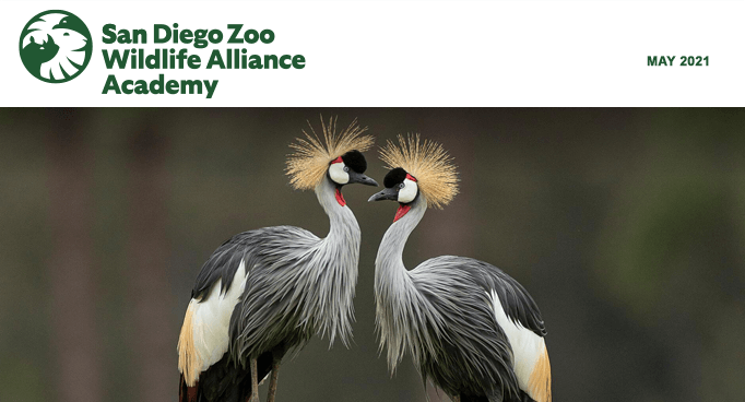 San Diego Zoo Wildlife Alliance Academy, May 2021, African crowned cranes