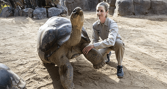 Vet with a Galapagos tortoise at the San Diego Zoo.